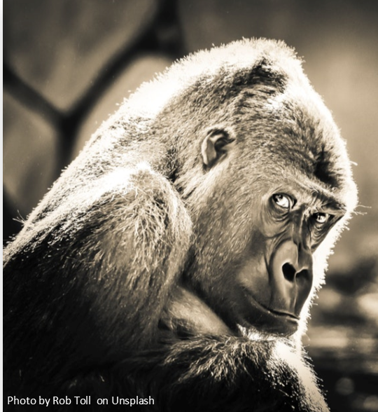 Primate Perspectives